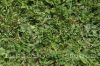 Grass Tillable Texture-1