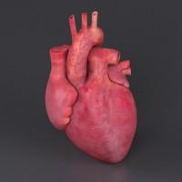 human heart ma