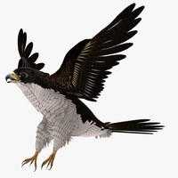 peregrine falcon 3d ma