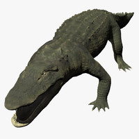 3d model alligator displacement animation