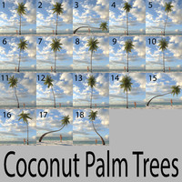 Coconut Palm Collection