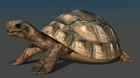 tortoise max