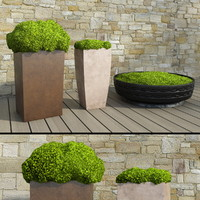 plant outdoor 3d obj