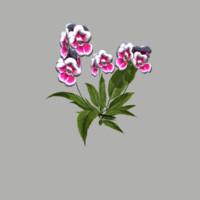 flower 15 fbx
