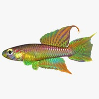 3d realistic killifish model