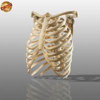 anatomy medical 3d obj