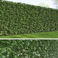 max rich ivy
