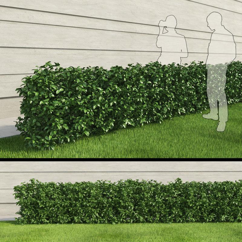 shrubus.jpg