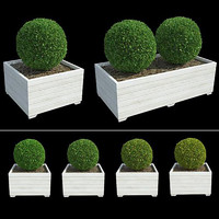 boxwoods 3d model