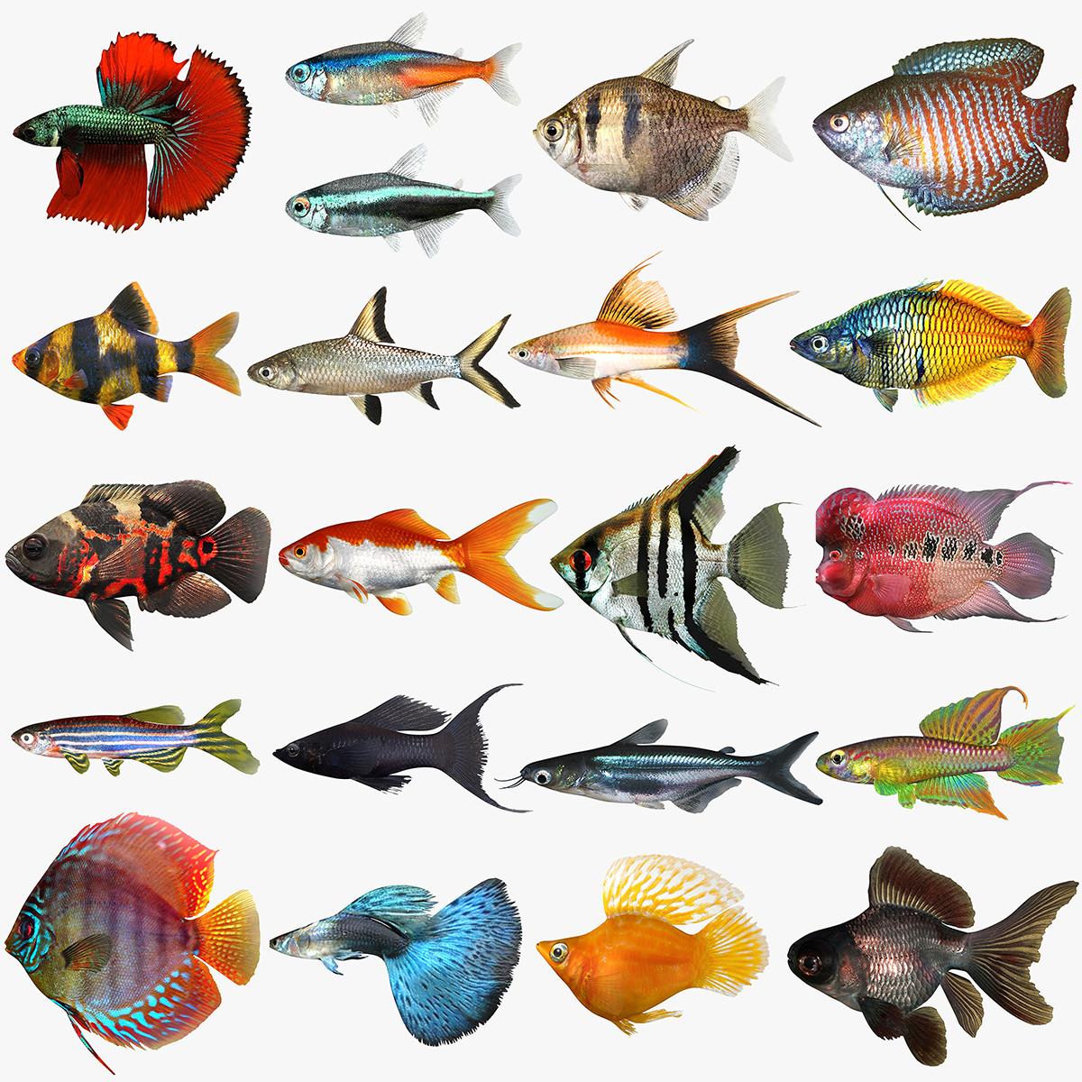 Mega freshwater fish max for Betta fish names