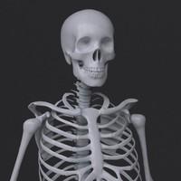 3d model skeleton human man