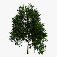 tree plants 3d 3ds
