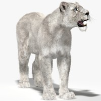 3d lioness white rigged fur