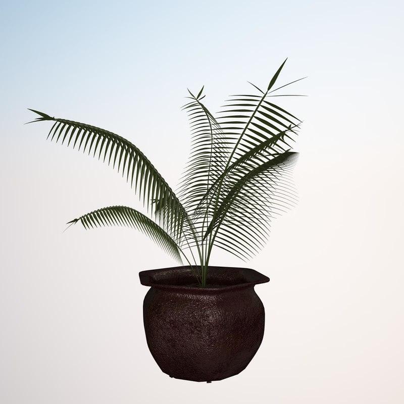 Render_Plant_Cyclad_Palm_V-Ray_10000.jpg