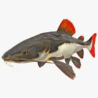 3d model redtail catfish