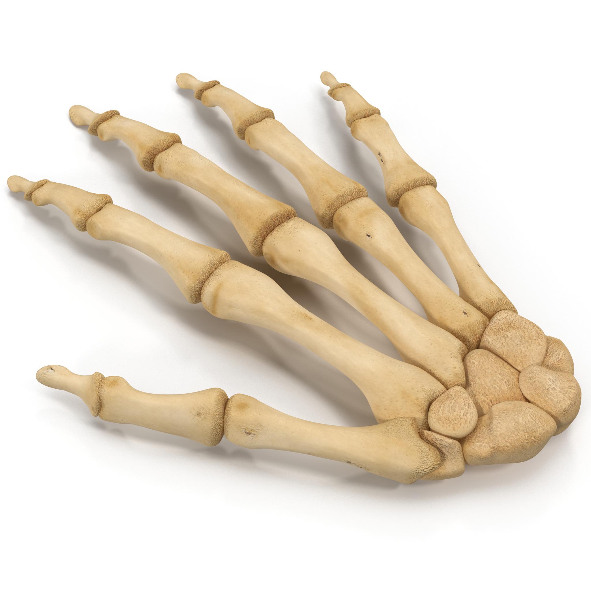 Skeleton Hand_2.jpg