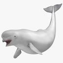 Beluga Whale 3D models