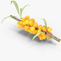 3d sea buckthorn model