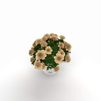 Decorative Plant `141127`5A