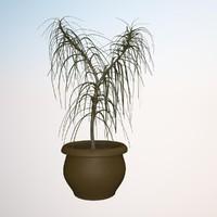 plant dracena marginata 1 3d max