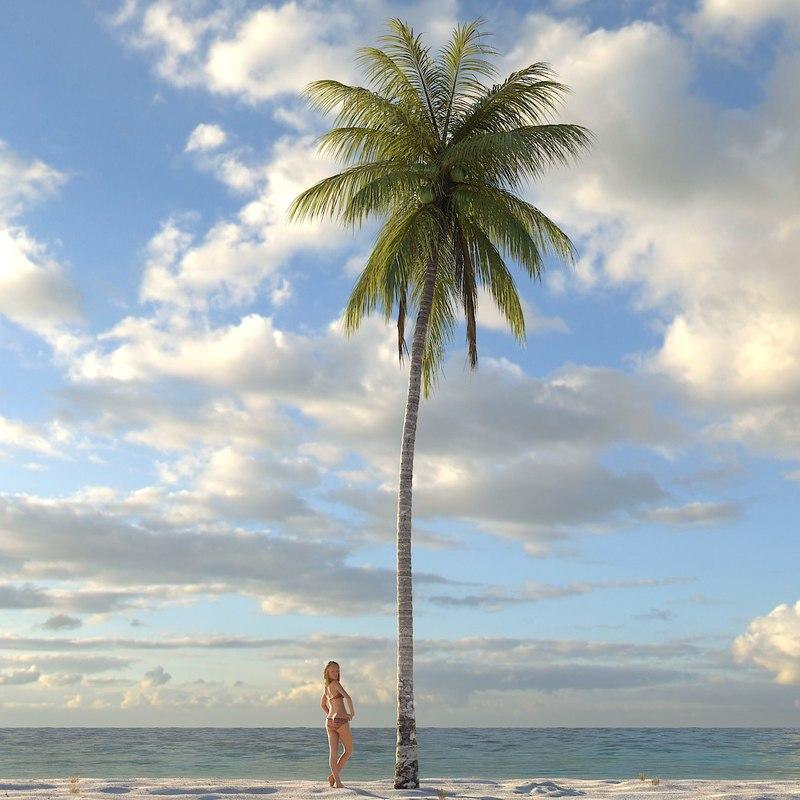 palm_coconut08_dusk_f_0000.jpg