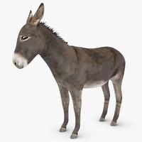 donkey scanline 3d max