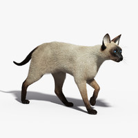 3d model siamese cat fur