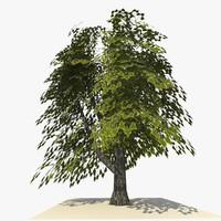 3d tree ready dae
