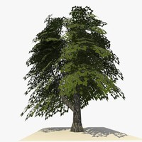 3d tree ready dae model
