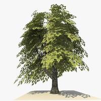 3d tree 17