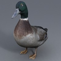 duck 3d obj