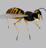 3ds max wasp