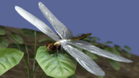 Dragon fly low poly, rigged and animated