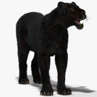 3d lioness black rigged fur model