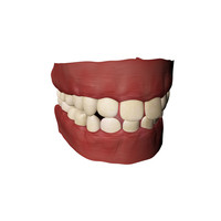 3d model teeth gums