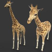 giraffe 3d model