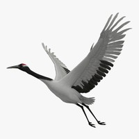 maya grus japonensis red-crowned crane