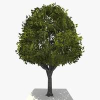 c4d tree ready dae