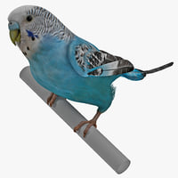 3ds max budgerigar pose