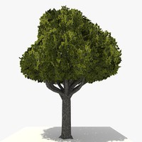 3d model tree ready dae