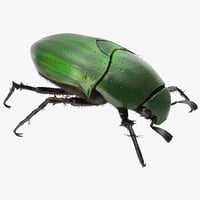 Green Scarab Beetle