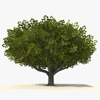 tree ready dae 3d model