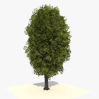 tree ready dae c4d