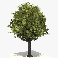 tree 17 c4d