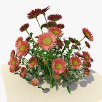 bunch daisy flowers 3d model