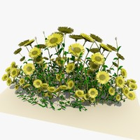 bunch daisy flowers 3d model