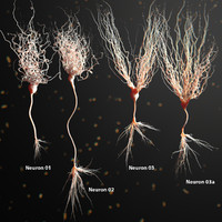 Three Neuron Package Realistic Anatomy