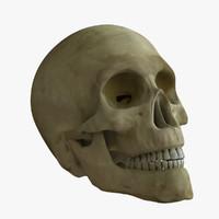 Skull Rigged