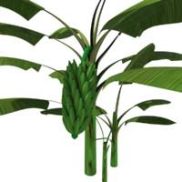 3d plantain plant