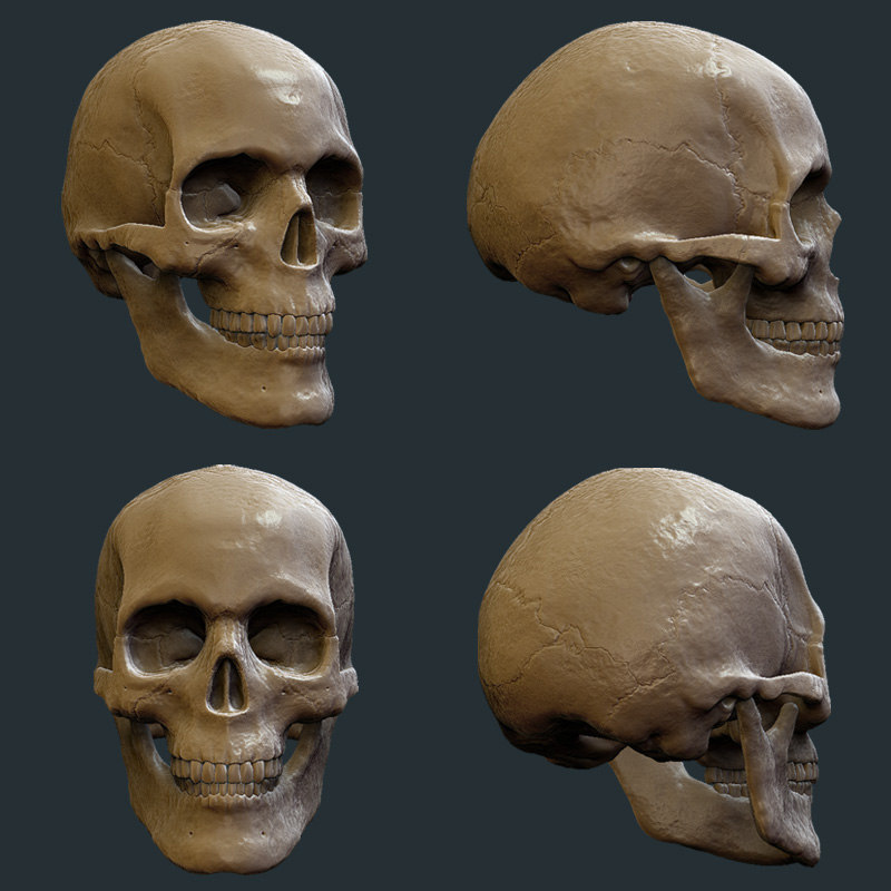 Skull_colour.jpg